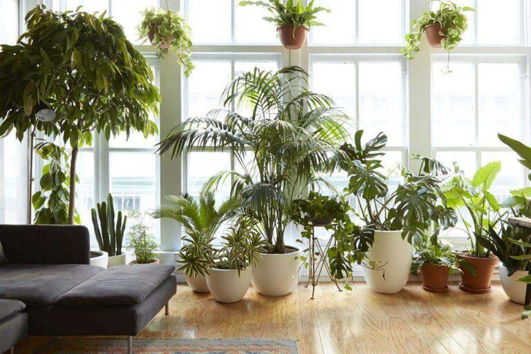 Piante da interno: le migliori 10 per una casa moderna